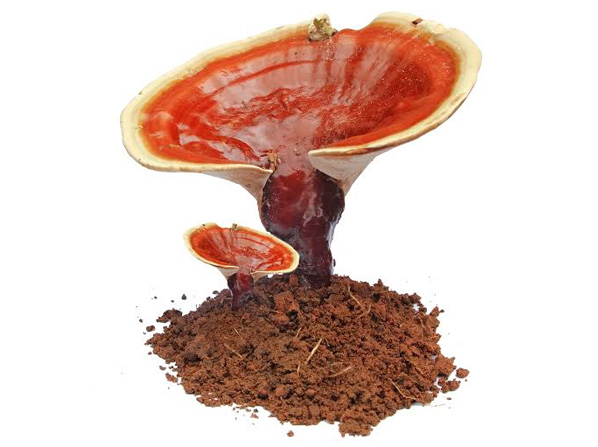 ganoderma_with_description_revised_final